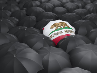 california state flag on umbrella. United states local flags
