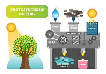 Photosynthesis factory infographic vector illustration for clean nature.