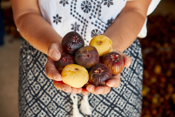 Woman holding figs in her hand. Ripe sweet figs. Healthy mediterranean fig fruit