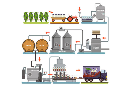 Wine production process, production beverage from grape flat vector Illustrations