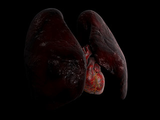 Human Lung and heart anatomy, 3d Illustration on black background
