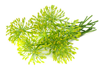 fresh dill flower isolated on white background