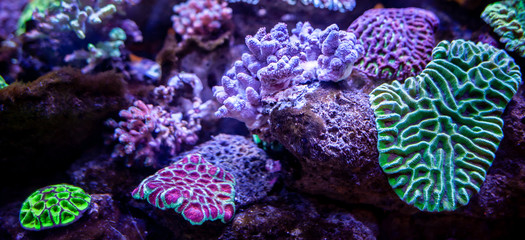 Photo sur Aluminium Recifs coralliens Underwater coral reef landscape background in the deep lilac ocean