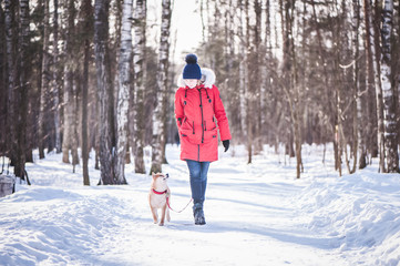 Dog of the Shiba inu breed walks on a leash with the owner on the road in the winter forest