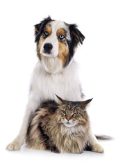 Fototapete - dog and cat