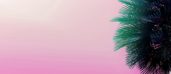 Wall Mural - Website heading and banner with copy space in light pink color and palm tree. Concept of Los Angeles and cheap travel agency, summer vacations blog header.