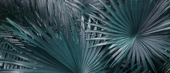 Fotomurales - Banner of tropical leaves in dark soft colors. Concept of summer and travel agency, jungle theme and blog heading.