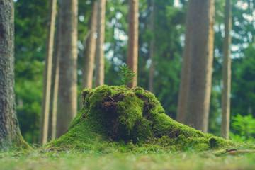 Wood stub