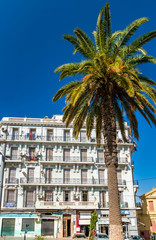 Palm tree and a French colonial building in Oran, Algeria