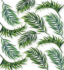 Tropic leaves patterm Vector. detailed 3d exotic realistic palm leaf decors