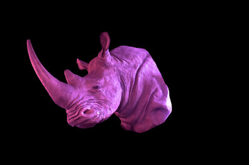 Rhino or Rhinoceros close up ,Effect  pink filter
