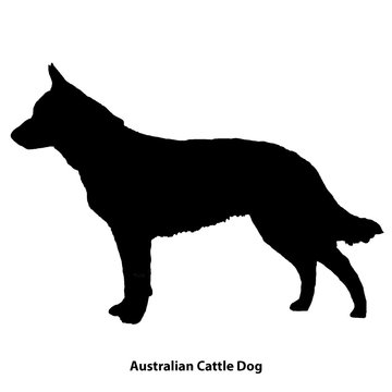 Australian Cattle Dog black silhouette of a dog