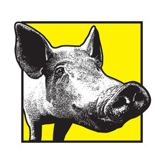 Pig graphic illustration. A pork animal drawing in vintage engraving style, vector design arts.