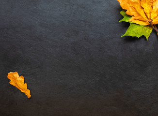 Back to school concept. Black chalkboard with pieces of chalks and autumn yelllow leaves isolated on white background. Flat lay .