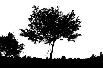 Realistic birch tree silhouette (Vector illustration).