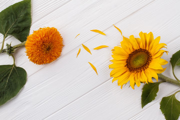 Orange baby and yellow sunflowers. Top view. White wooden background.