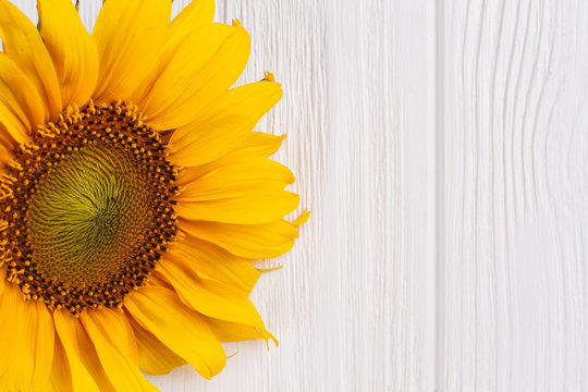 Yellow sunflower on wood close up. White wooden table background.
