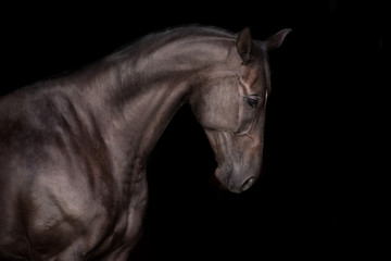 Black horse portrait on black background
