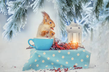 The squirrel at the table is eating nuts from a cup in a forest winter glade. Fairy-tale forest winter picture.