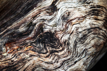 abstract wavy surface of old wood