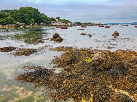 Brown seaweed and trees