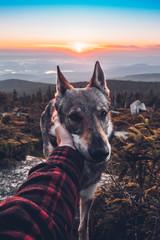 Aplha wolf