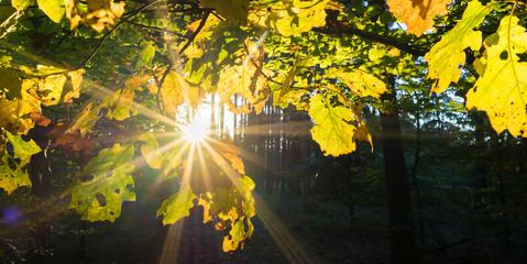 Herbst im Laubwald