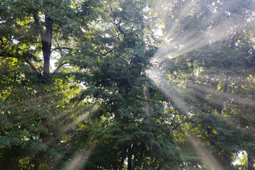 The sun's rays passing through the trees