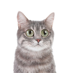 Funny cat with big eyes on white background. Cute pet