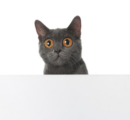Funny cat with big eyes and space for design on white background. Cute pet