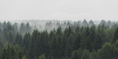 Panoramic landscape view of spruce forest in the fog in the rainy weather Wall mural