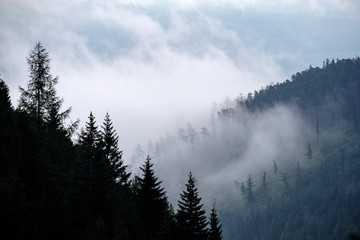 panoramic view of misty forest in western carpathian mountains. Tatra in foggy sunset