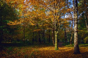 Autumn in the city park. The city of Khmelnitsky