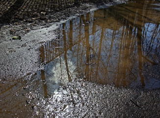 reflection of trees in a puddle in spring