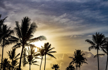 Palm trees silhouetted against beautiful sunlight background in tropical island landscape scene