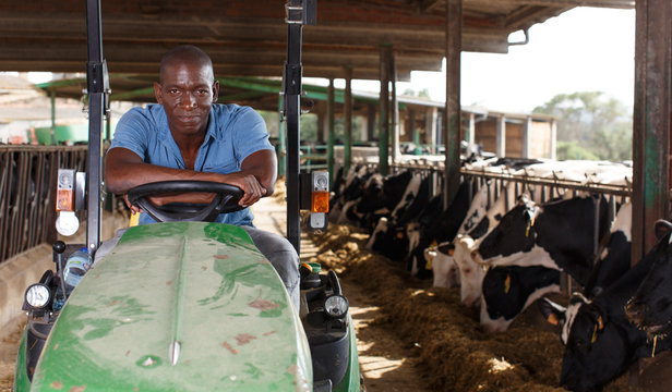 Dairy farm worker in tractor
