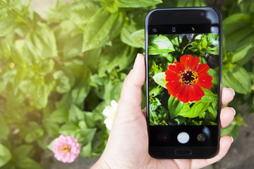 Hand with smartphone shooting garden red summer flowers, copy space.