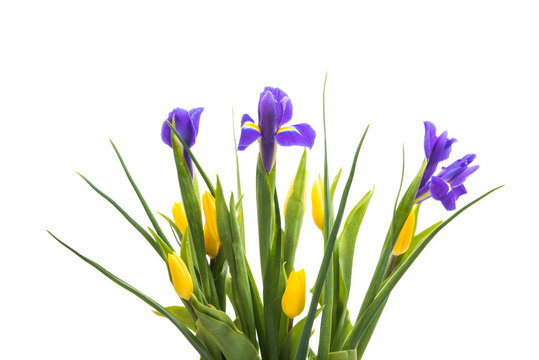 bouquet of iris with tulips isolated