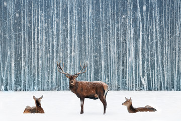 Fototapete - Group of noble deer in a snowy winter forest. Christmas fantasy blue image.