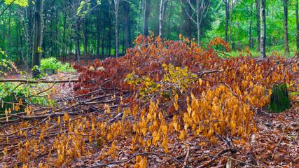 Fototapeta Jesienne liście w lesie na ziemi obraz