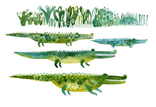 illustration of crocodile. Hand painted watercolor alligator illustration.