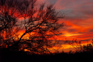 An intensely colorful sunset behind a silhouetted mesquite tree in the Sonoran desert of Arizona.