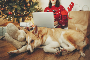 happy girl in santa hat working on laptop and sitting with cute dog at golden beautiful christmas tree with lights and presents in festive room. family atmospheric   moments. freelance