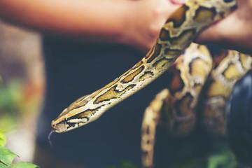 Child hand holding snake boa, Halloween