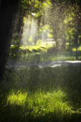 Rain in the forest, wet leaves in the foreground, background of the picture and rain drops in the focus
