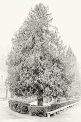 Photo of big white tree under snow in winter