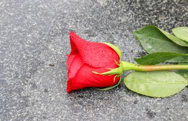 A Rose Laying on Granite