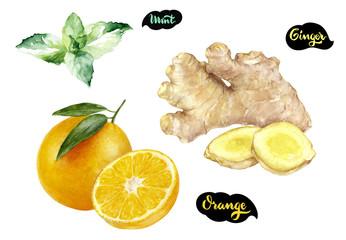 Ginger orange mint watercolor hand drawn illustration set