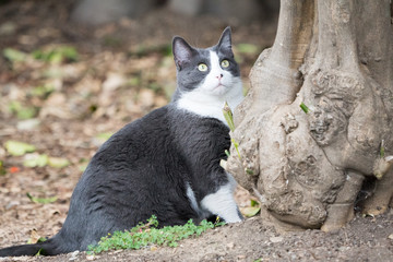 Gray lovely cat sitting near tree