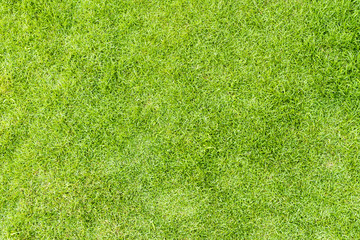 Green grass texture background for spring or summer and World Earth Day concept.